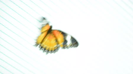 kelebek : insect butterfly on a colored background macro