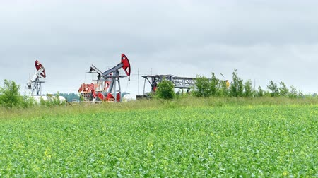 Working Oil Pump Jack in a Oilseed Rape Field