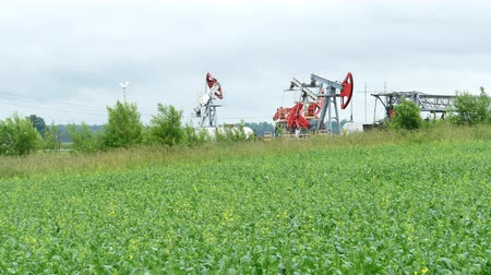 canola : Working Oil Pump Jack in a Oilseed Rape Field
