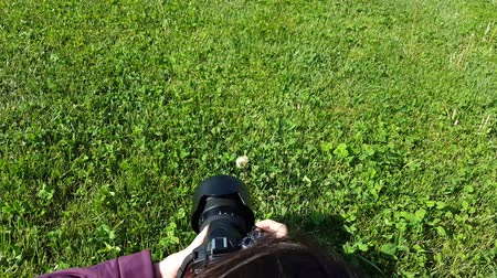 Female photographer using DSLR camera on grass, shooting dandelion Stok Video
