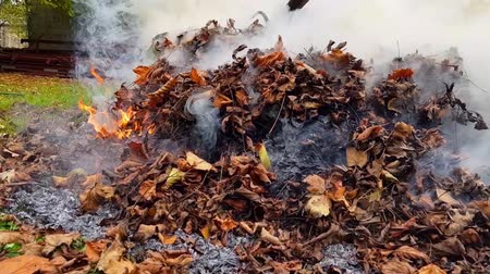 tiller : Dead leaves burn in flames and make a lot of smoke.
