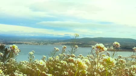 antenas : Landscape with flowers and bees in the foreground. Stock Footage
