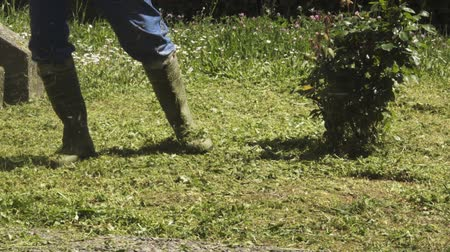 mow : Cutting grass in garden with the trimmer. Stock Footage