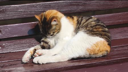 street cat resting Stock Footage