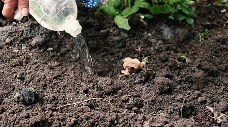 sow : Farmer throws seeds into the ground in his garden. Spring work, close-up. Stock Footage