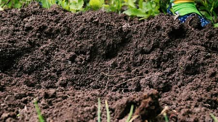 rim : Weeding soil in the garden. Garden works, weeding of the ground by rakes from weeds