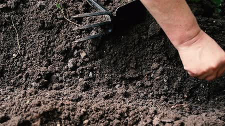 rim : Farmer throws seeds into the ground in his garden. Spring work, close-up. Vídeos