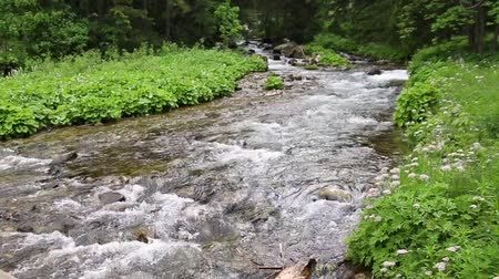 povodeň : Mountain stream in the forest. Close up, clear, drinking water