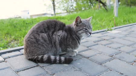 Street gray tabby cat sitting in the park