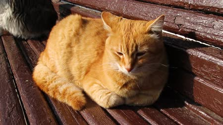 Ginger cat icing on a wooden canopy outside on a sunny day