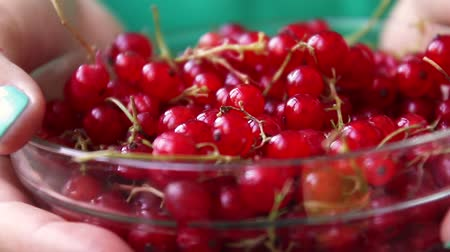 antioksidan : A girl in a green dress holds in her hands a glass bowl with red ripe currants on a pink background. Summer berry concept. Healthy eating Stok Video