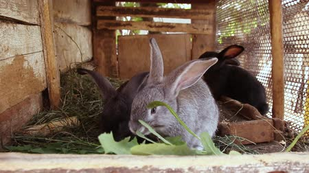 petit lapin : Many little funny rabbits eat grass in a cage on the farm together. Domestic rabbits in a cage.