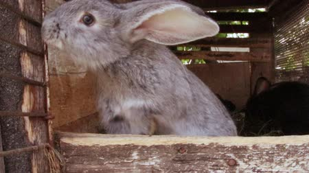 tame animal : Many little funny rabbits eat grass in a cage on the farm together. Domestic rabbits in a cage.