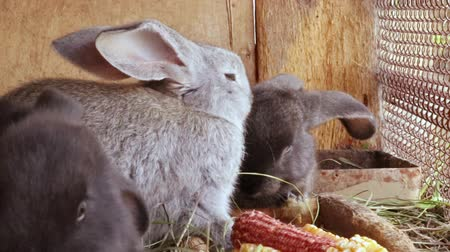 отпрыск : Many little funny rabbits eat grass in a cage on the farm together. Domestic rabbits in a cage.