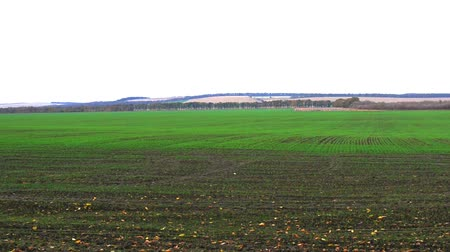 Panorama view of field with cloudy weather Stok Video