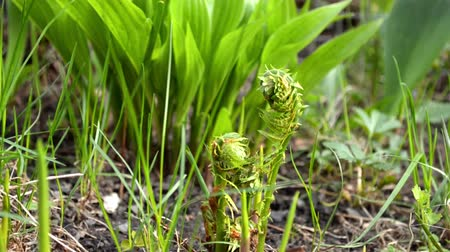 Green young flowers and fern Stock mozgókép