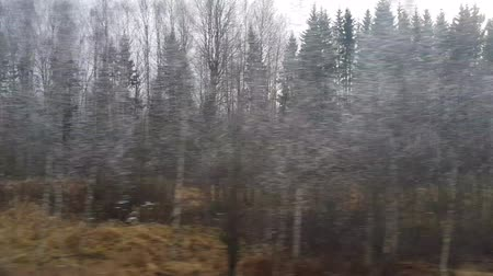 Landscape of the middle part of Russia from a moving high-speed train on a cloudy day