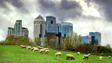 docklands : LONDON, UK - MARCH 29, 2014 Canary Wharf view from the local farm. Stock Footage