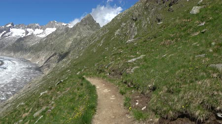 trilha : Walk through the great Aletsch Glacier, route Aletsch Panoramaweg in national park Switzerland, Europe. Summer landscape, sunshine weather, blue sky and sunny day
