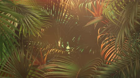 silhouette of palm : Closeup tropical leaf of trees, summer background. Elegant and luxury dynamic 80s, 90s retro style animation footage Stock Footage