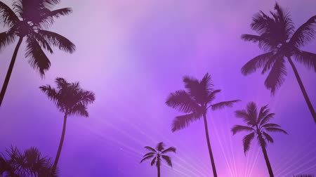 tropy : Panoramic view of tropical landscape with palm trees and sunset, summer background. Elegant and luxury dynamic 80s, 90s retro style animation footage