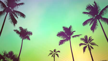 silhouette of palm : Panoramic view of tropical landscape with palm trees and sunset, summer background. Elegant and luxury dynamic 80s, 90s retro style animation footage