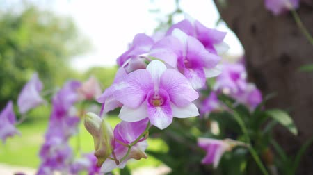 Beautiful pink orchid in garden. Vídeos