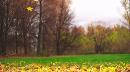 Leaf fall in the autumn city park. Slow motion. Colorful fall season.
