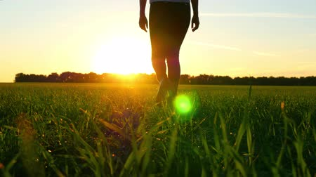 süet : Female legs in jeans walking on a green lawn against a sunset background. Solar glare. Stok Video