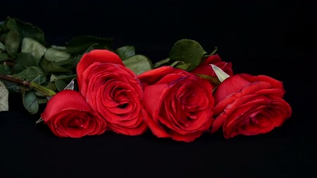 quebradiço : Fall of red roses on a black background. Stock Footage