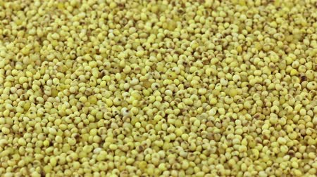 peeled grains : Raw millet grains rotation, closeup Stock Footage
