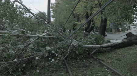 çabaları : The storm caused severe damage to electric poles falling tilt.