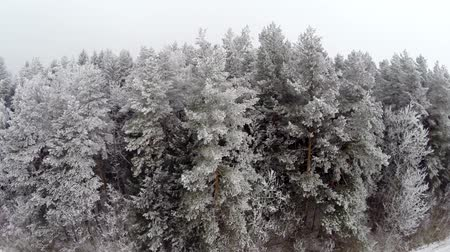Aerial view of beautiful winter forest, trees covered with snow, with misty background. Different angles of view. Wideo