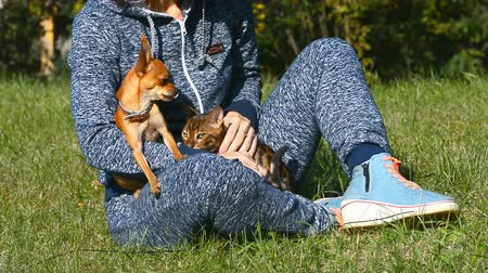 cheirando : Cat and dog. Toy Terrier mini and Bengal cat. Stock Footage