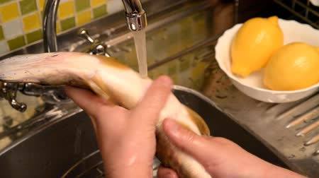 lave : Washing, cleaning and evisceration of fish. The fish are cleaned in a sink under running water. A special fish cleaner is used. Fish pike. Nearby lie washed lemons. Stock Footage