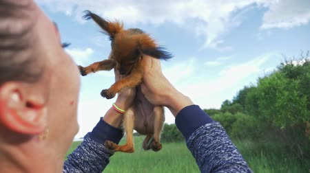 trusting : Dog Toy Terrier throws up into the sky. A woman throws a favorite pet in her hands. Shooting slow motion 180 fps. The dog funny and cheerfully gnaws gently at his mother. Stock Footage