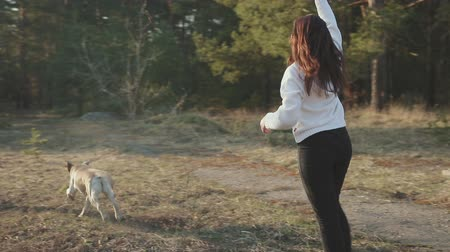 young animal : Girl in black pants and a white jacket throws a stick, a gold-tone Labrador catches up with the object. Steadicam shot