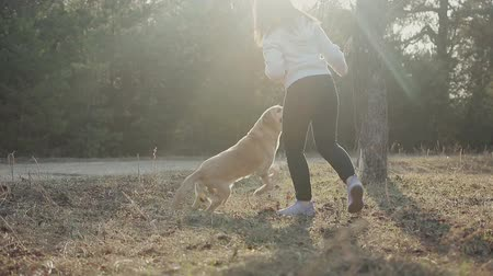 послушный : Cute young girl plays in the sun with a Labrador of Golden color in the spring woods, the man holding a stick, the dog bites the object. Steadicam shot Стоковые видеозаписи