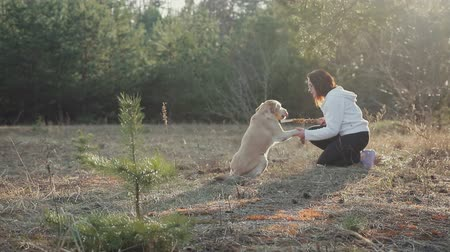 obediente : Young pretty girl in sunglasses gives a hand to a Golden Labrador in the spring forest