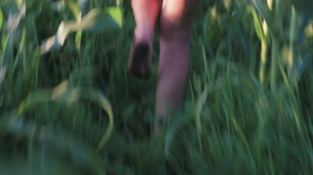 assombrada : The legs of a hunted, young girl running away from a maniac, shes scared. Thriller in corn. Handheld shot. Live camera Stock Footage