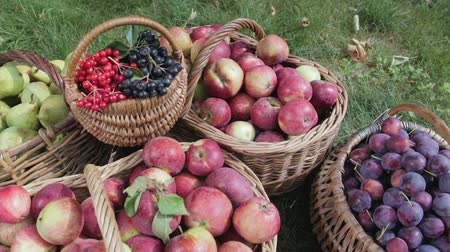 열매 : Baskets of red apples, green pears, plums, red and black Rowan stand on the green grass