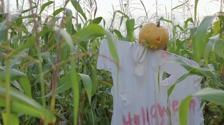 dismay : The celebration of Halloween. Garden Scarecrow with Jacks lantern instead of the head and the bloody inscription Halloween is on the corn field. Steadicam shot