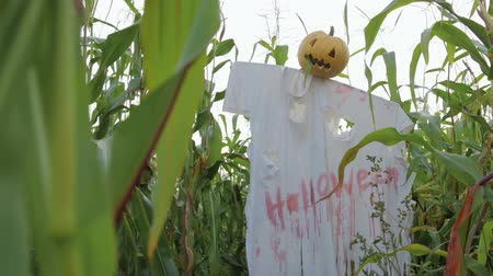 jitters : The celebration of Halloween. Garden Scarecrow with Jacks lantern instead of the head and the bloody inscription Halloween is on the corn field. Steadicam shot