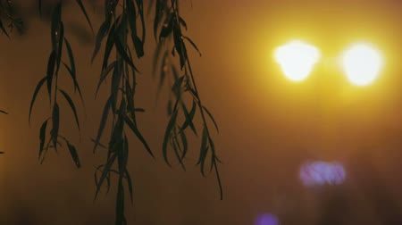 благодарение : Close-up of branches and leaves of the tree willows shimmering on the background of night lights of a misty town. The concept of late autumn