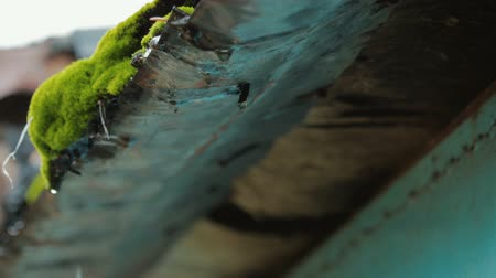 mossy : Close - up of flowing down drops of water from the old iron tide in the spring Stock Footage