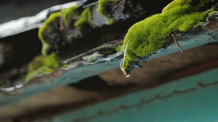 pingos de chuva : Close - up of flowing down drops of water from the old iron tide in the spring Stock Footage