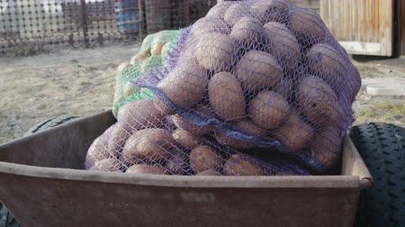 крахмал : POV shot of bags of bags of potatoes lying and the body transported by a farm truck. 4k