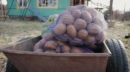 収穫 : POV shot of bags of bags of potatoes lying and the body transported by a farm truck. HD