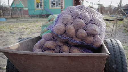 unpeeled : POV shot of bags of bags of potatoes lying and the body transported by a farm truck. HD