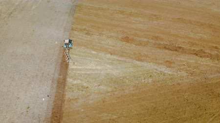 solo : Aerial view blue tractor with four ploughshares cultivating dry fertile brown earth. The concept of agriculture. The magnificent scenery of the countryside
